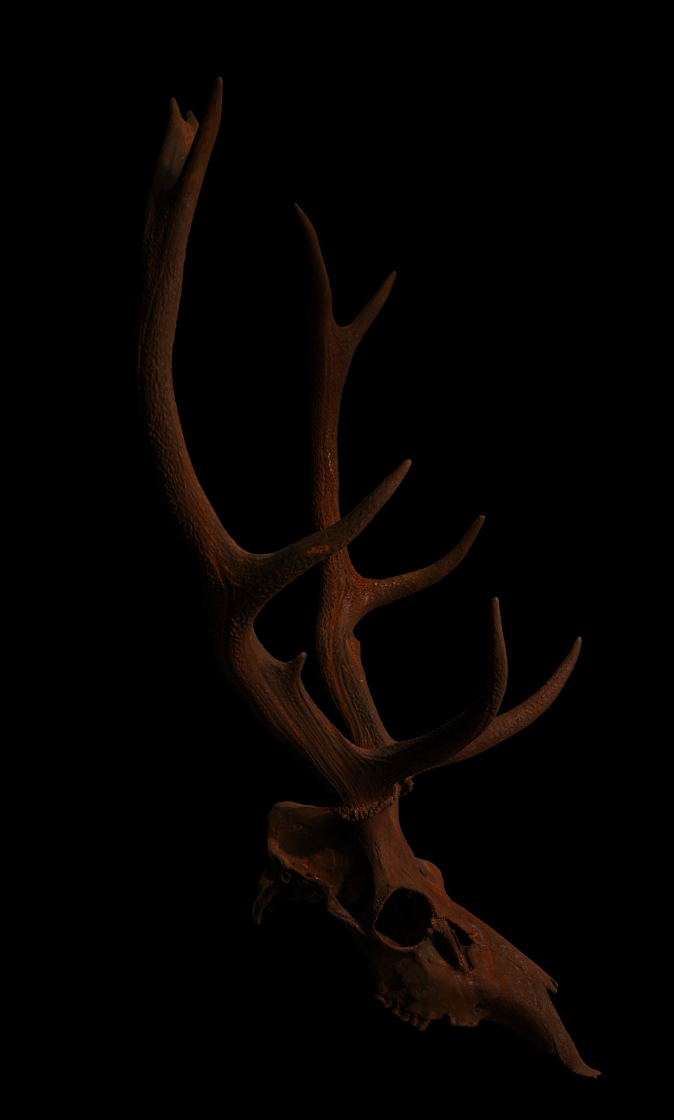 stags head wall sculpture